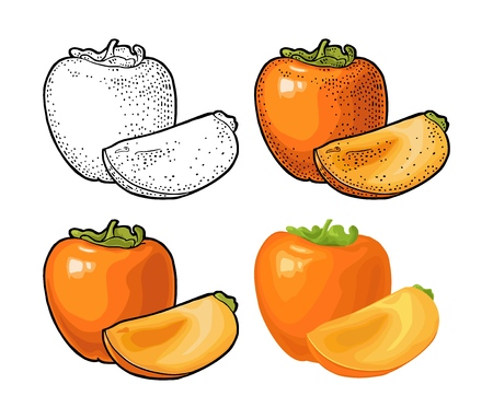 Whole and half persimmon. Vector engraving and flat color illustration 일러스트