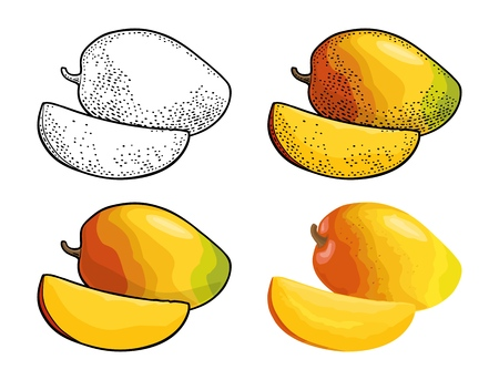 Whole and slice mango. Vector color vintage engraving and flat