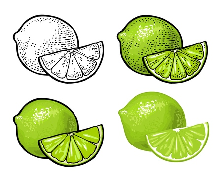 Lime slice and whole. Vector color vintage engraving and flat Illustration