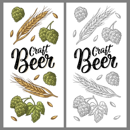 Vertical poster with ears of barley, leaves and cones of hops. Craft Beer handwriting calligraphic lettering. Vector vintage color engraving illustration. Isolated on white background.