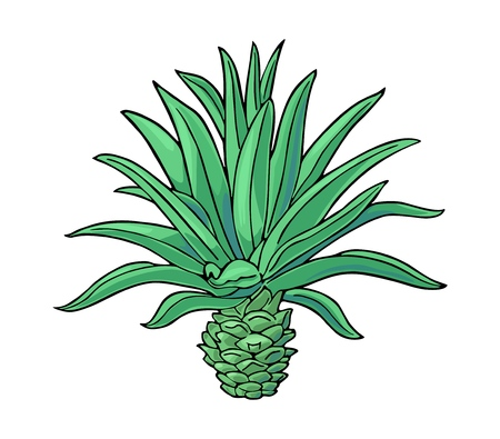 Cactus blue agave. Vintage vector color illustration for label, poster, web. Isolated on white background  イラスト・ベクター素材