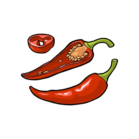Chilli whole, half and slice. Vector vintage color and black engraving illustration. Isolated on white background. Hand drawn design element for label, menu and poster Stock Illustratie