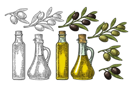 Bottle glass oil with cork stopper and branch olive with leaves. Hand drawn design element. Vintage color and black vector engraving illustration for logotype, poster, web. Isolated on white background.