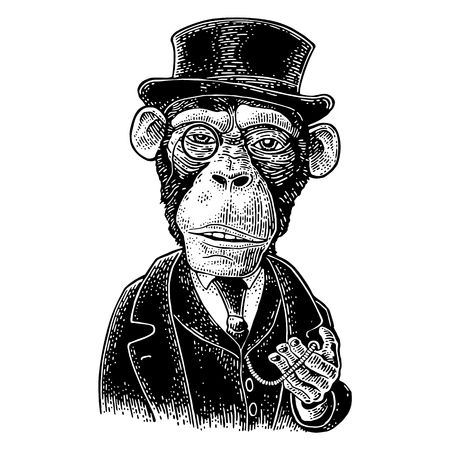 Monkey gentleman holding a watch and dressed in a hat, suit, waistcoat. Vintage black engraving illustration for poster. Isolated on white background. Hand drawn design element for label and poster Illustration