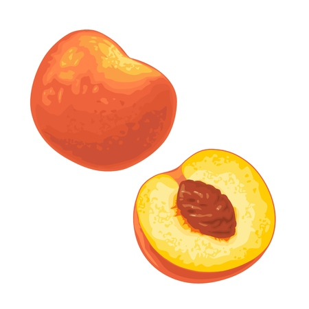 Whole and half peach with seed. Vector color flat illustration for menu, web, poster. Isolated on white background 向量圖像