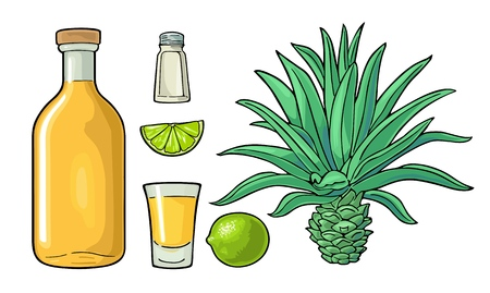 Glass and bottle of tequila. Cactus blue agave, salt and lime. Hand drawn sketch set of alcoholic cocktails. Vintage color vector illustration for label, poster. Isolated on white background