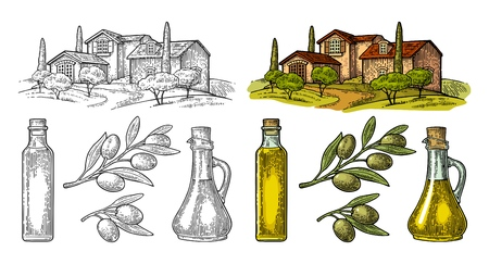Set olive. Bottle and Jug glass of liquid with cork stopper and branch with leaves. Rural landscape with villa or farm with field, tree and cypress. Vector vintage color engraving on white background  イラスト・ベクター素材