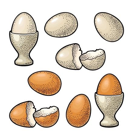 Egg and broken shell. Vintage color engraving illustration