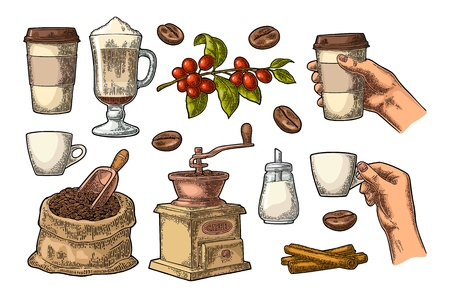 Set coffee. Glass latte, beans, wooden scoop, hand-held grinder, sugar, cinnamon stick, branch with leaf and berry. Female hand hold cup. Vintage color vector engraving illustration isolated on white Banque d'images - 112253316