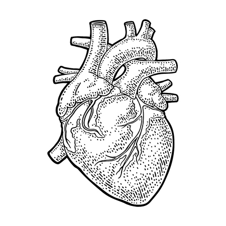Human anatomy heart. Vector black vintage engraving illustration isolated on a white background. For web, poster, info graphic.