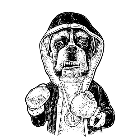 Dog boxer dressed in human in robe, gloves and medal with number 1. Vintage black engraving illustration for poster. Isolated on white background Archivio Fotografico - 112090026