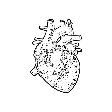 Human anatomy heart. Vector black vintage engraving illustration isolated on a white background. Hand drawn design element for label, poster, web, poster, info graphic.