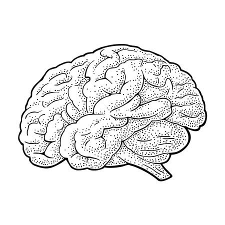 Cerebro de anatomía humana. Vector ilustración de grabado vintage negro aislado en un fondo blanco. Elemento de diseño dibujado a mano para etiqueta, cartel, web, cartel, gráfico de información.