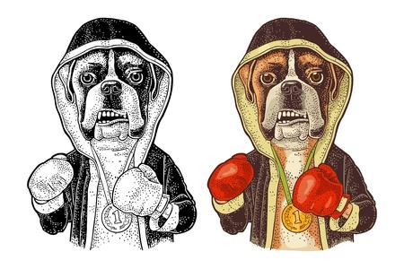 Boxer de perro vestido de humano en bata, guantes y medalla con el número 1. Ilustración de grabado de color vintage para cartel. Aislado sobre fondo blanco