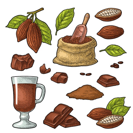 Chocolate piece, bar, shave. Fruits of cocoa with leaves and beans. Vector vintage color engraving illustration. Isolated on white background. Hand drawn design element for label and poster Illustration