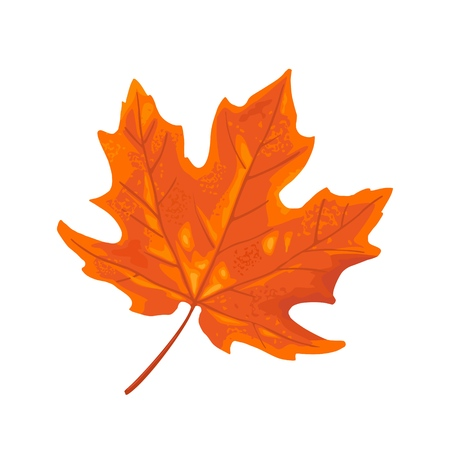 Maple leaf. Vector color vintage flat illustration. Isolated on white background Illustration
