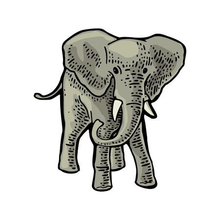 Elephant. Engraving vintage vector color illustration. Isolated on white background. Hand drawn design element for label and poster