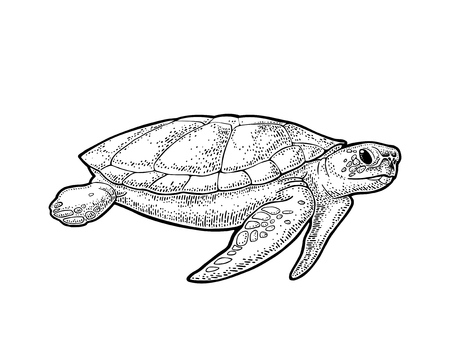 Olifanten en schildpadden die platte aarde houden. Gravure van vintage zwarte illustratie.