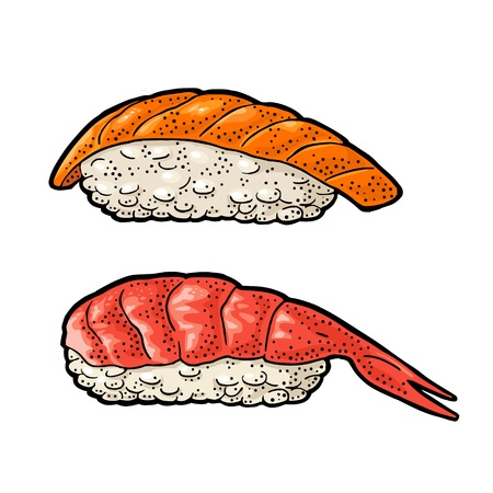 Nigiri Sushi with fish and shrimp. Isolated on white background. Vintage color vector engraving Illustration