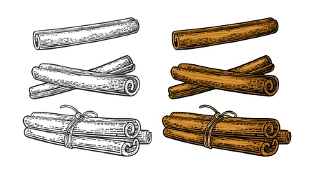Cinnamon stick set. Single and bunch tied by rope. Isolated on white background. Vector color and monochrome vintage engraving illustration. Hand drawn design element for label and poster