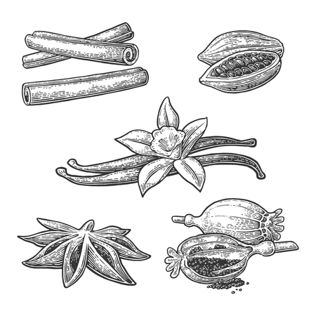 Set of spices. Anise star, cinnamon stick, fruits of cocoa beans, vanilla stick and flower, poppy heads and seeds. Isolated on white background. Vector black vintage engraving illustration. Illustration