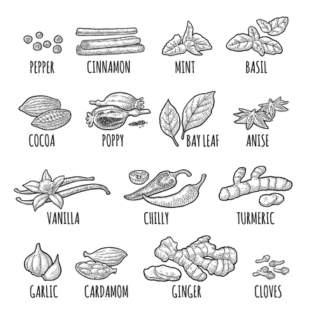 Set spices. Black pepper, cinnamon, turmeric, mint, cloves, cocoa, poppy, chilli, vanilla, bay leaf, anise, garlic, cardamom, ginger. Vector black vintage engraving illustration isolated on white