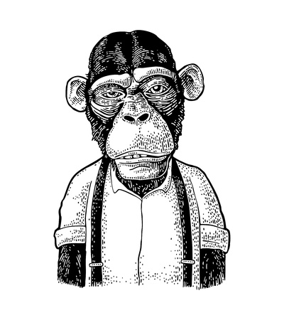 Monkey businessman dressed in the shirt and suspender. Vintage black engraving illustration for poster. Isolated on white background