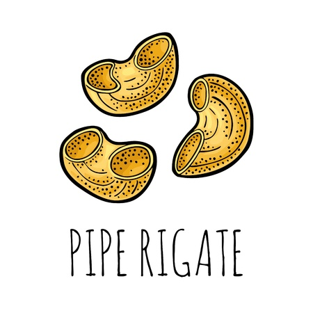 Pasta pipe rigate. Vector vintage engraving color illustration 向量圖像