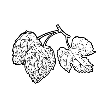 Hop branch with leaf. Isolated on white background. For labels, packaging and poster with production process brewery of beer. Vector vintage engraved illustration. Hand drawn design element Standard-Bild - 110259380