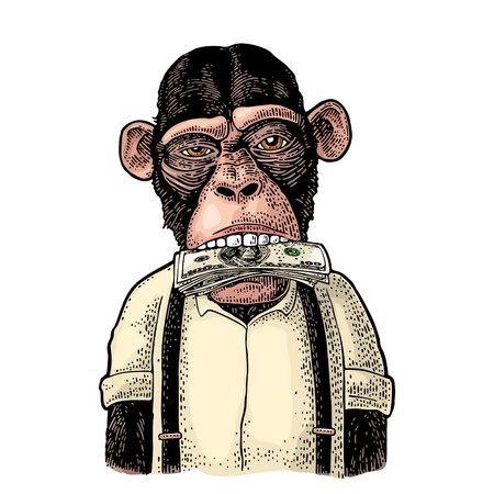 Monkeys with money on mouth. Vintage color engraving illustration for poster, web, t-shirt, tattoo. Isolated on white background 向量圖像