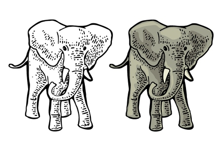 Elephant. Engraving vintage vector color and monochrome illustration. Isolated on white background. Hand drawn design element for label and poster 向量圖像