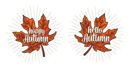 Maple leaf. Hello Happy Autumn calligraphic handwriting lettering. Vector color vintage engraving illustration. Isolated on white background Illustration