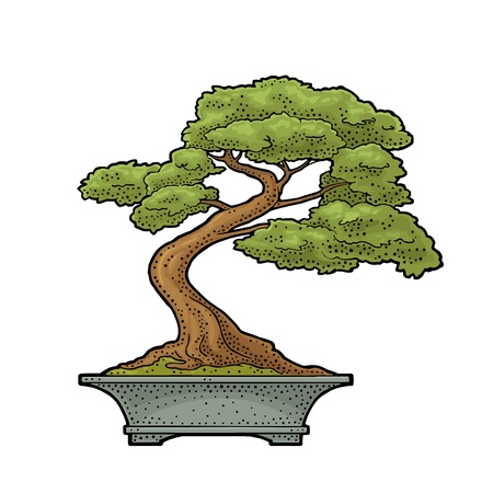 Bonsai tree in pot. Vintage black vector engraving illustration
