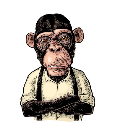 Monkey businessman with paws crossed dressed in the shirt and suspender. Vintage color engraving illustration for poster. Isolated on white background Illustration