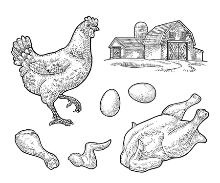 Set chicken. Whole hat, leg, wing, egg and farm. Vintage black vector engraving illustration for poster and label. Isolated on white background. Stock Vector - 108122692
