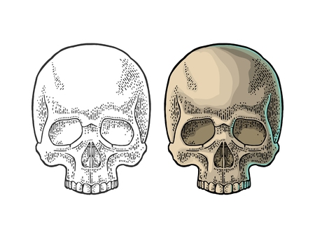 Skull human. Color vintage vector illustration. For poster and tattoo biker club or invitation Halloween. Hand drawn design element isolated on white background Illusztráció