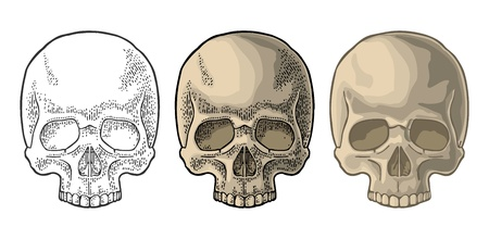 Skull human. Color vintage engraving and flat vector illustration. For poster and tattoo biker club or invitation Halloween. Hand drawn design element isolated on white background Illusztráció