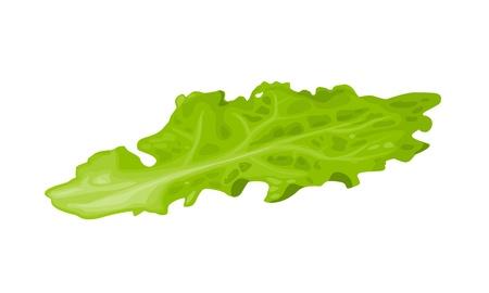 Lechuga. Aislado sobre fondo blanco. Vector ilustración colorida plana para cartel, menú, web, banner, icono Ilustración de vector