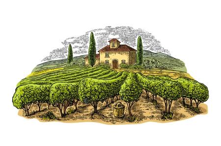Paisaje rural con villa, viñedos y colinas. Grabado vectorial