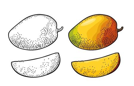 Whole and slice mango. Vector color vintage Illustration