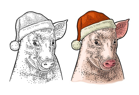 Pig head in Santa Claus hat. Vector color and black vintage engraving illustration isolated on white background. For greeting card, poster, web, banner New Year 2019 Illustration