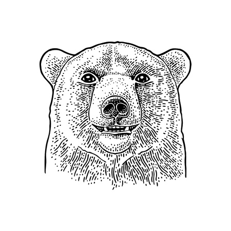 Bear head. Vintage black engraving illustration for poster. Isolated on white background