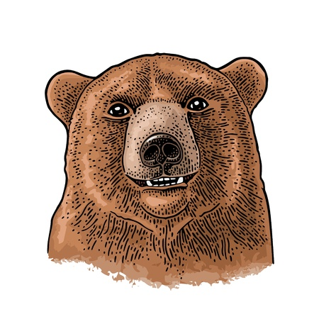 Bear head. Vintage color engraving illustration for poster. Isolated on white background