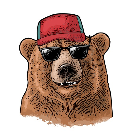 Bear dressed in a baseball cap, sunglasses. Vintage color engraving illustration for poster. Isolated on white background