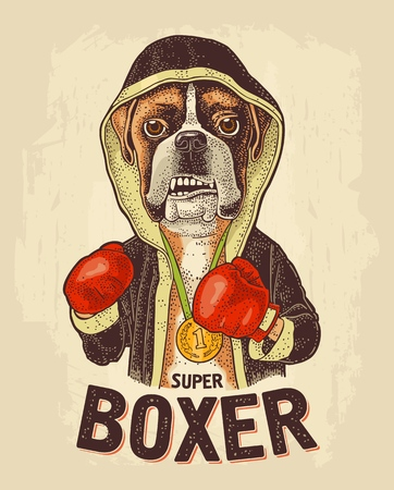 Dog dressed in human in robe, gloves and medal with number 1. Super boxer lettering. Vintage color engraving illustration for poster. Isolated on beige background Archivio Fotografico - 127190421