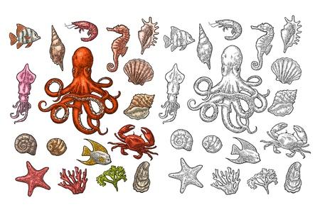 Set sea animals. Shell, coral, crab, shrimp, star, fish ,octopus Illustration