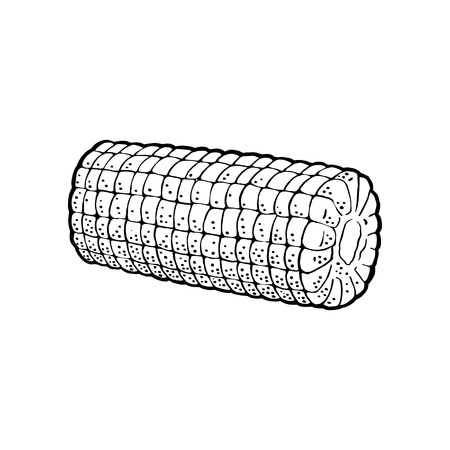 Ripe cob of corn peeled from the leaves. Vector vintage engraving illustration. Isolated on white background.