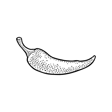 Chilli. Vector vintage black engraving illustration. Isolated on white background. Hand drawn design element for label, menu and poster