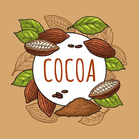 Fruits of cocoa with leaves and beans. Vector vintage black engraving illustration. Isolated on white background. Hand drawn design element for label and poster Foto de archivo - 126640188