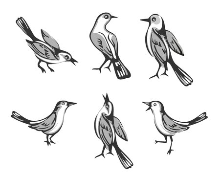 Set sitting bird. Isolated on white background. Vector flat illustration. Ilustração